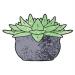 The Stem Plant Care