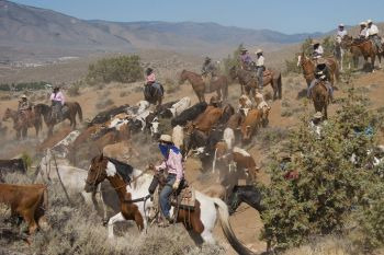Reno Rodeo, 2019 Cattle Drive